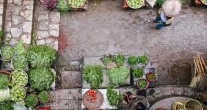 Как и какво да покрия в градината