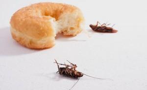 вреда от хлебарките