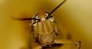 Защо хлебарка може да е опасна